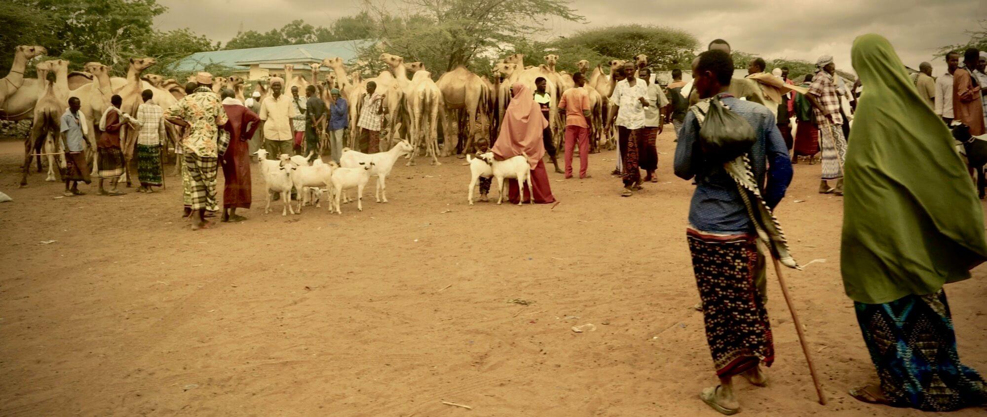 A Camel market in Dadaab refugee camp